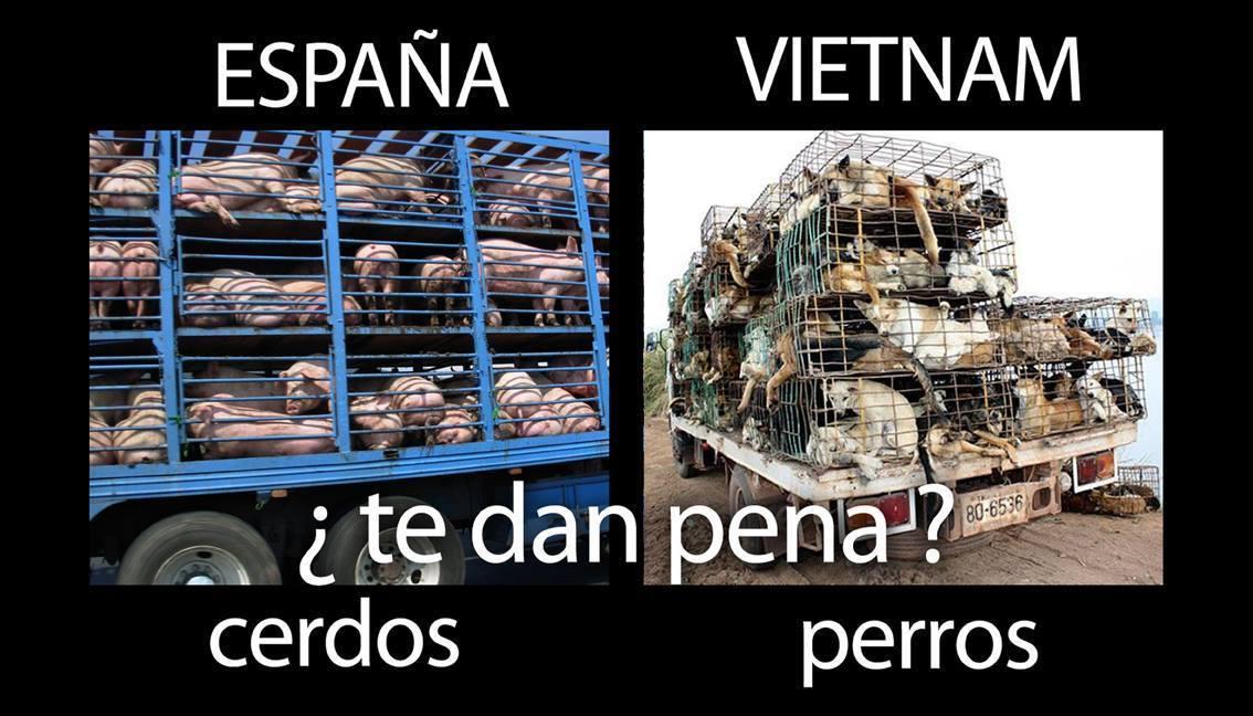¡Derechos Animales ya! - Explotación de perros y de cerdos