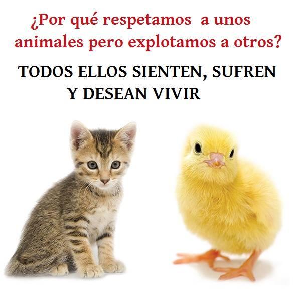¡Derechos Animales ya! - Por qué respetamos a unos animales pero explotamos a otros