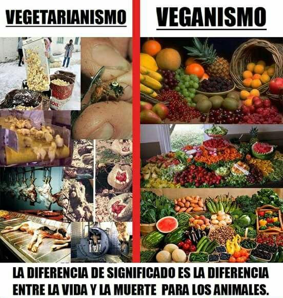 El vegetarianismo causa víctimas
