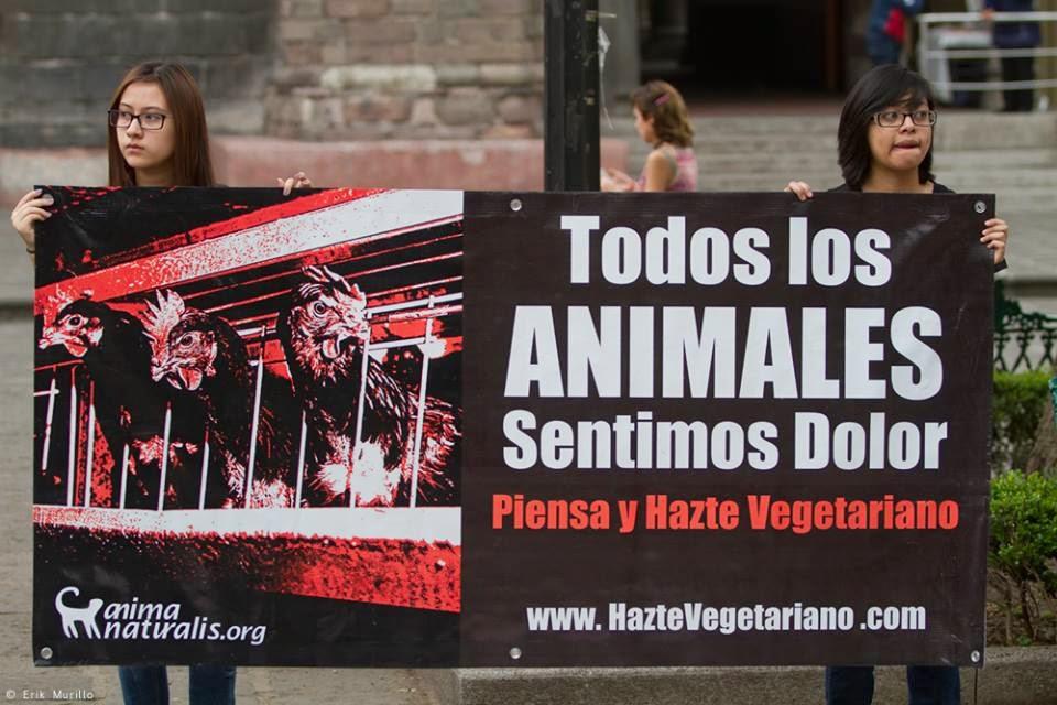 Manifestación de Anima Naturalis en México - Activismo animalista