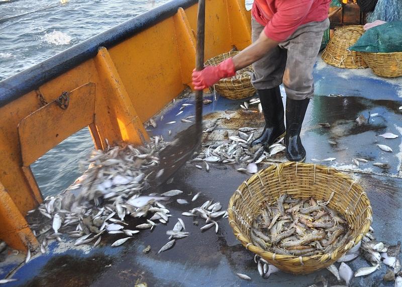 Descartes-pesqueros-para-la-captura-de-gambas