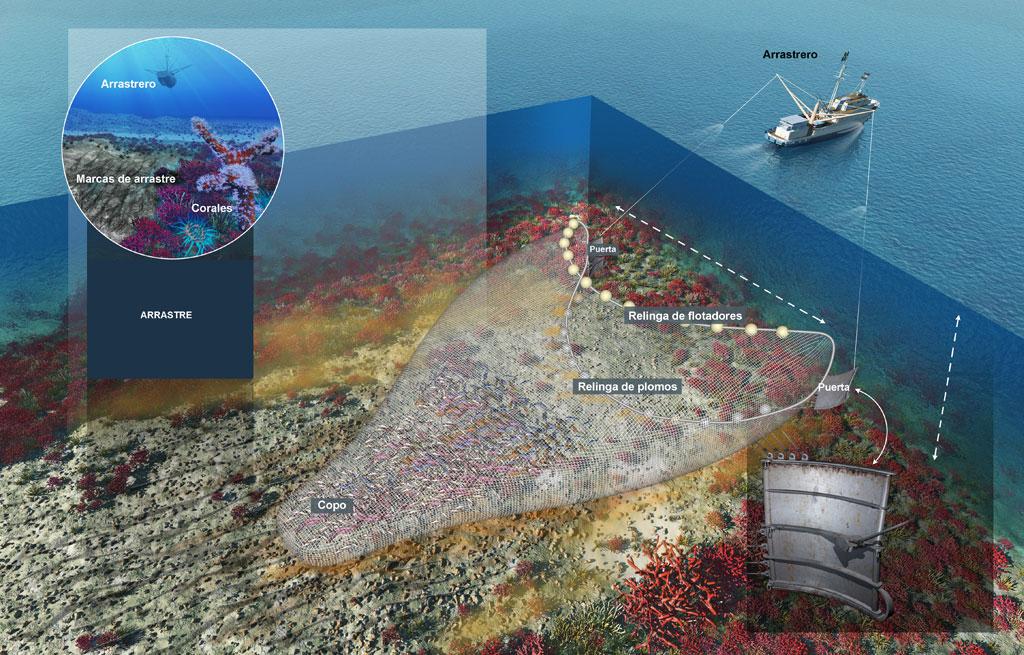 Ilustración pesca de arrastre - Atrocidad de los descartes pesqueros - Captura de animales