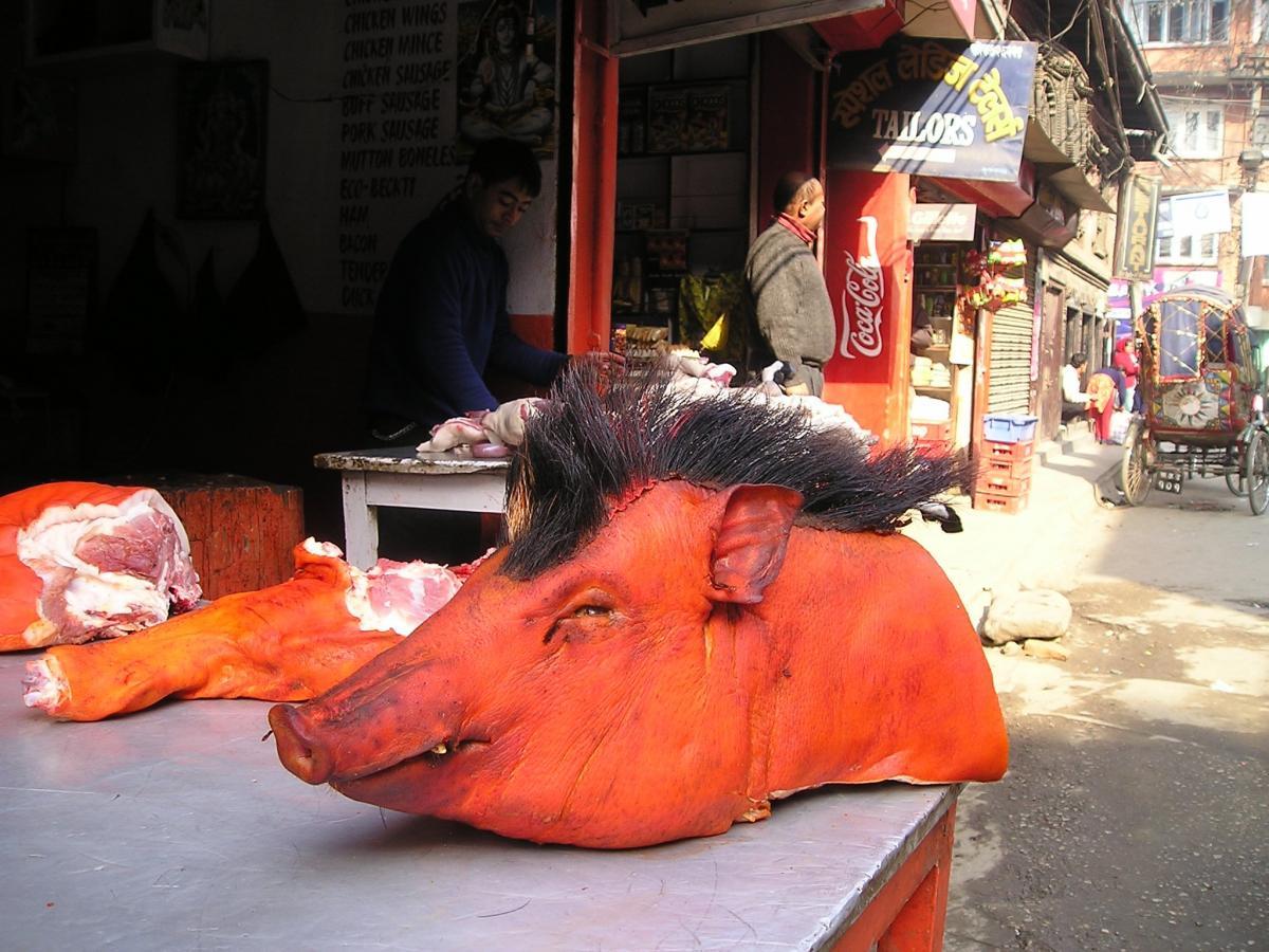 ¡Derechos Animales ya! - Cabeza de cerdo en Nepal