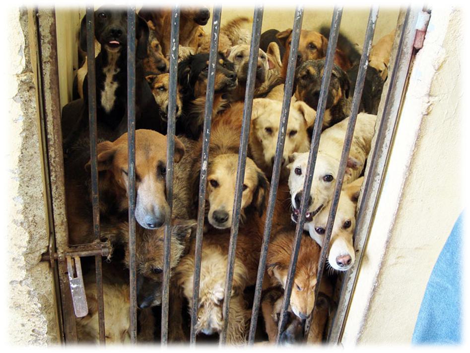 Perros encerrados en una perrera - La esclavitud animal existe