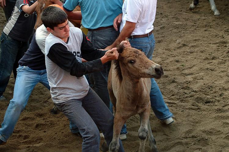 Rapa das bestas - Dominación humana - Festejos con animales